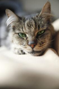 Katzenaugenblick von Magnus Pomm