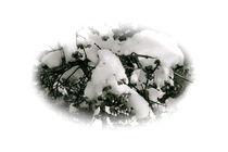 auf schnee by christina paddags