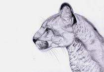 Katze by Sarina Pillusch