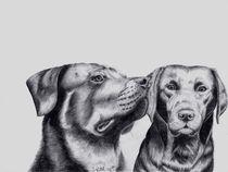 Rottweiler und Labrador by Sarina Pillusch