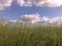 Weizen im Wind by Andy Becker