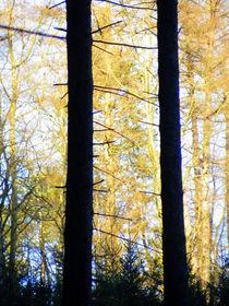 Goldene Sonne in den Bäumen by cicero