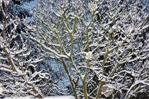 Winter 2010  von Roswitha Rudzinski