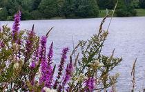 Blumen am Seeufer von Roswitha Rudzinski