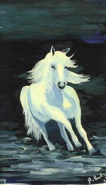 Weisses Wildpferd von Roswitha Rudzinski
