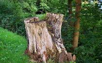 Mein Freund der Baum  von Roswitha Rudzinski