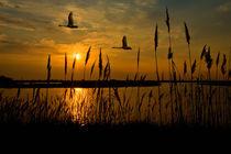 Schwäne im Sonnenaufgang von photomoments
