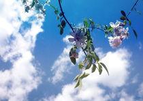 Flying Flower von Su Purol
