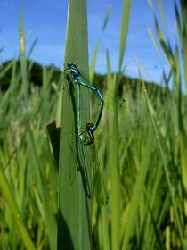 Libellen  by Susanne Krautz