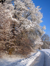 Winterzauber by Susanne Krautz