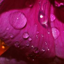 Queen of Flowers - Königin der Blumen von lessaksart