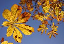 Herbst by Michaela Steininger