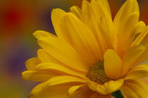 Movement in Yellow by Christine Amstutz