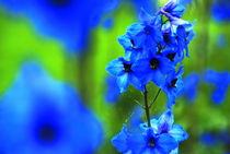 blueness von Rudolf Strasser