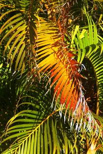 Palmen von Rudolf Strasser