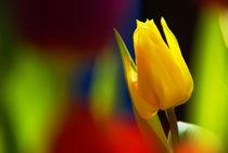 yellow von Rudolf Strasser
