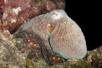 One more Octopusy von Harald Schottner