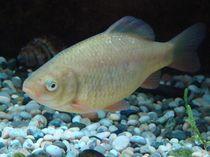 Fisch von Ka Wegner