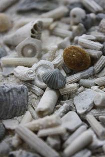 FOSSILIEN DURCHEINANDER by ohmuthi