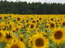 Sonnenblumenmeer by Ilona Wargowski