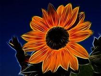 Sonnenblume von Ilona Wargowski