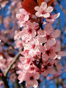 Frühlingsrauschen von Ilona Wargowski