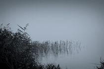 foggy day by daniela scharnowski