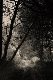into the light by daniela scharnowski
