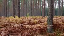 primeval forest by daniela scharnowski