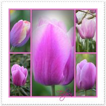 Tulpen-Collage by Rosi Lorz