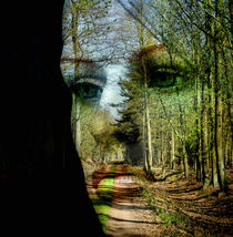 Wald-Gesicht