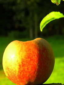 Apfel in der Sonne by tcl