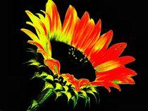 Crazy Sonnenblume  by tcl