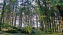 Forest Hill von tcl