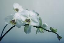 Orchideen by Falko Follert