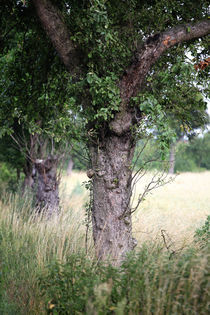 Der Baum am Weg von Falko Follert
