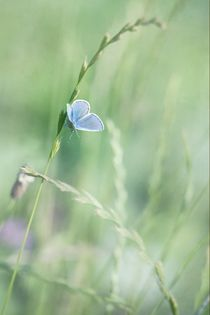 'blue wings' by Priska  Wettstein