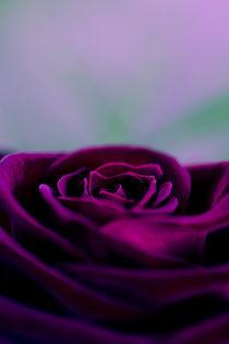 Der Rosenzauber von Falko Follert