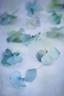 Blue blossoms  von Priska  Wettstein