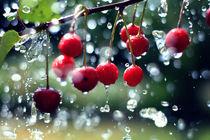 Kirschen im Sommerregen von Falko Follert