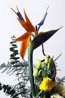 Paradiesvogelblume von Falko Follert
