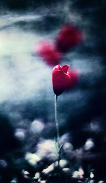 Die Nebelblume by Falko Follert