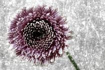 Die Digitale Blume von Falko Follert