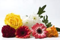 Engels Blumen by Falko Follert