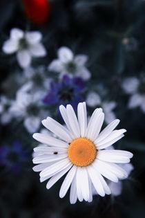 Die Liebe der Blumen  von Falko Follert