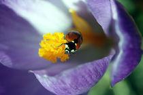 Ladybird by Falko Follert