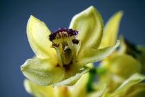 Orchideen von Falko Follert