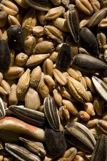 Küchen Samen Poster von Falko Follert