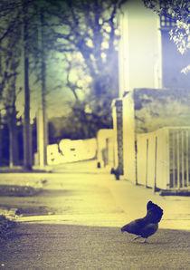 Einsam und allein von Falko Follert