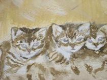 Kätzchen  von ernart